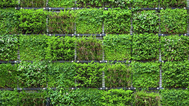 Biophilic Design: Improving Health and Well-Being in the Built Environment Course
